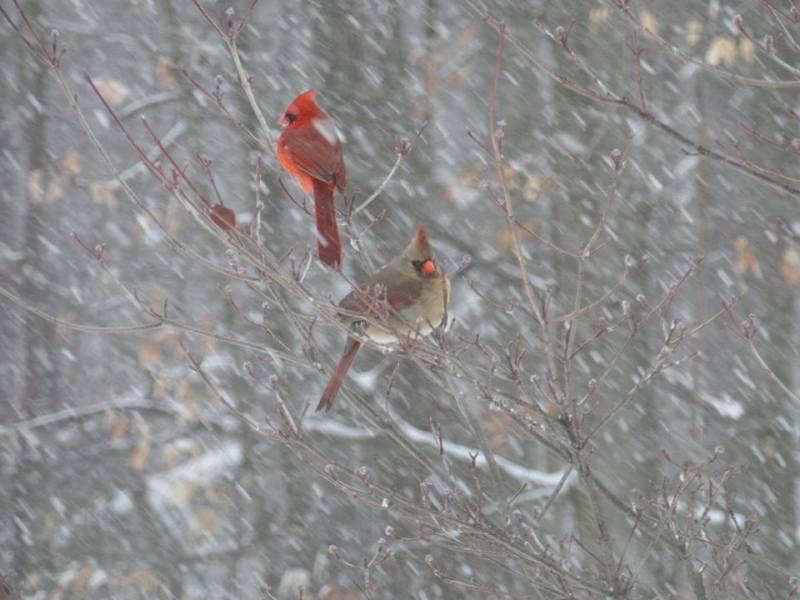 birds in snow